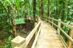 Boardwalk on piles in Guadeloupe